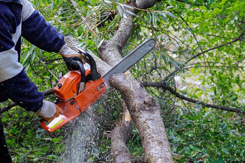 élagage-arbres-saint-vincent-de-connezac